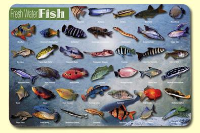 Freshwater Aquarium Fish With Names Image Name catfish